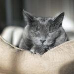 วิธีดูแลแมวสูงวัย ให้อยู่เอาใจกันไปนานๆ